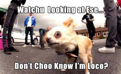 loco puppy
