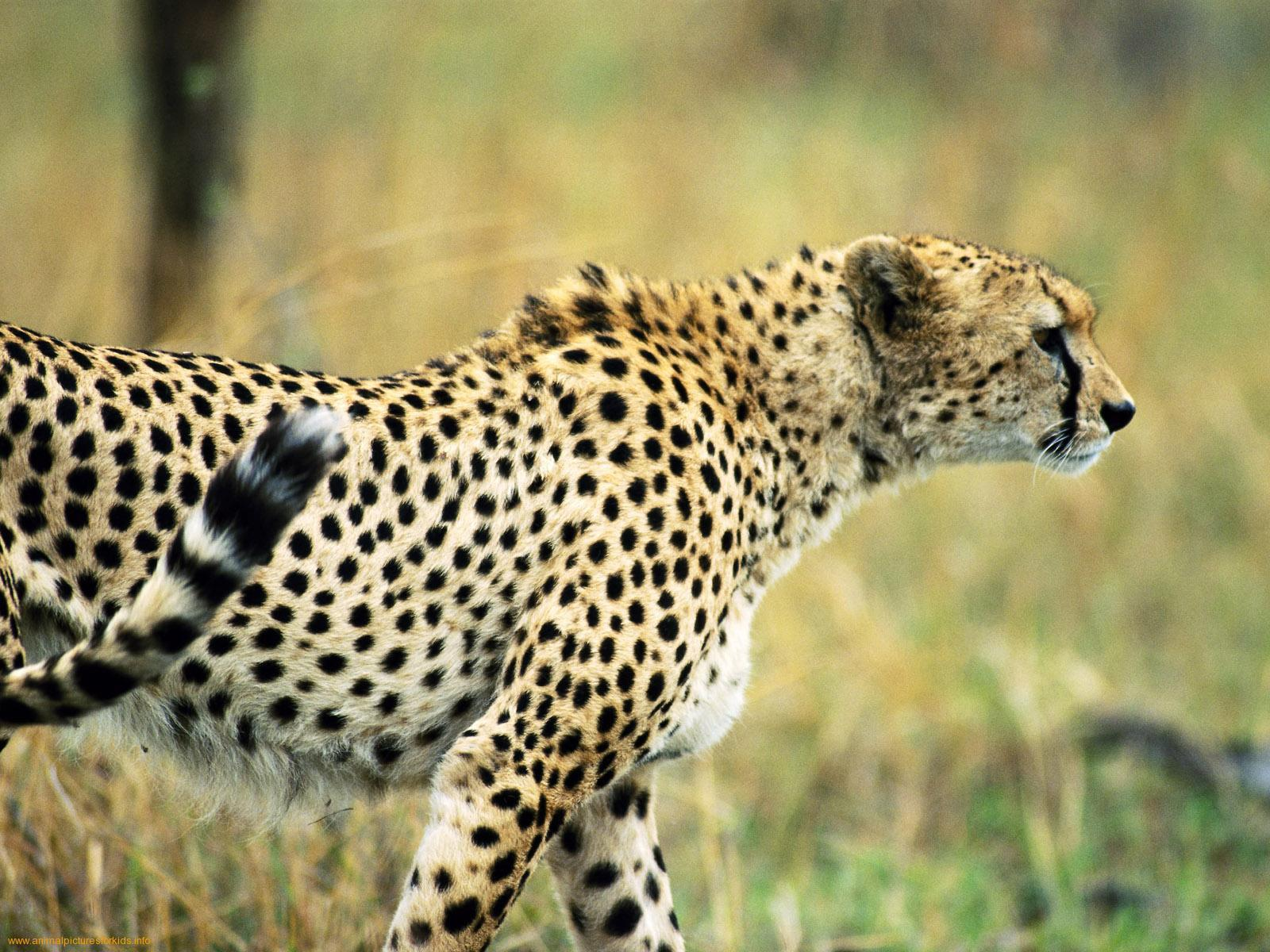 animals wallpapers 29 1