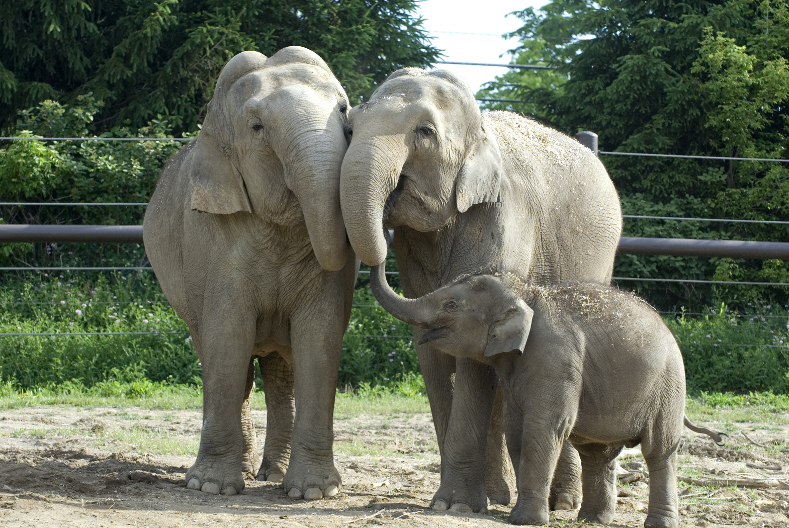 Research Supported by Columbus Zoo Reveals Growth of Illegal Ivory.