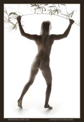 Nude-Muse-Harper-Dry-z3l5h2pcqx.jpg